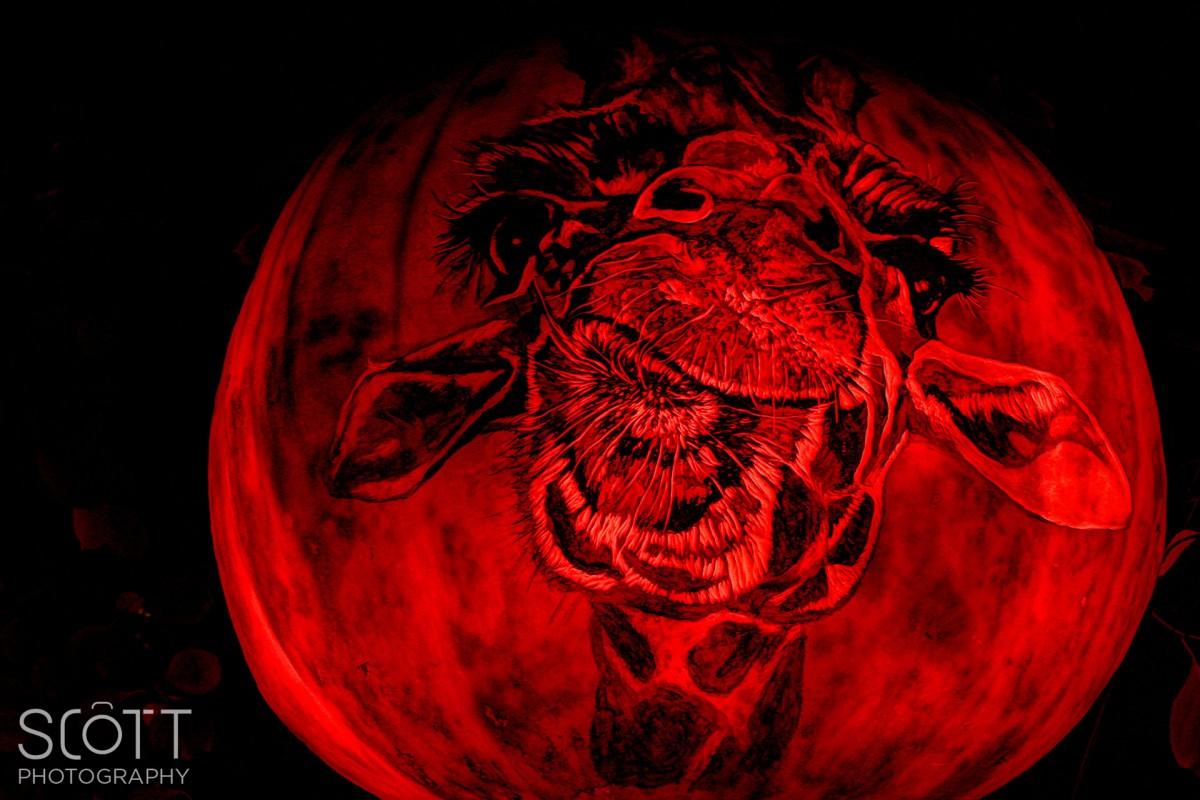 2014 Roger Williams Jack-O-Lantern Spectacular - Scott ...
