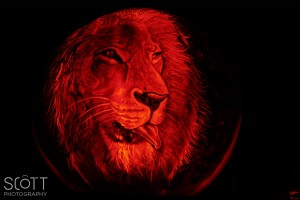 Lion Pumpkin Carving - Jack-O-Lantern Spectacular - Roger Williams Park Zoo - 2014